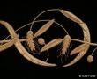 Coronation goldwork metal threads hand embroidery
