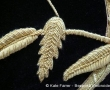 Detail of above of Coronation goldwork metal threads hand embroidery